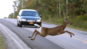 "Drive Safely: Give Wildlife a ""Brake"""